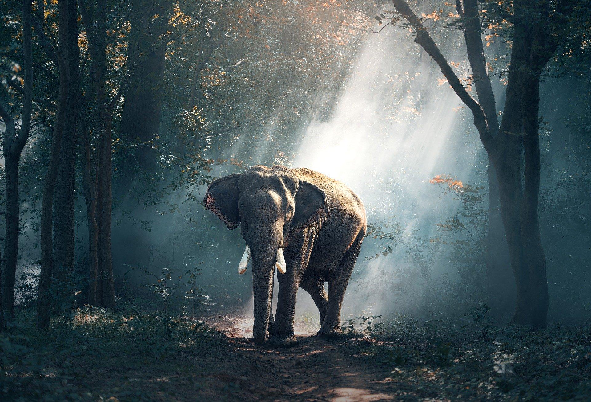 Significado de soñar con elefante