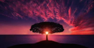 Significado de soñar con los árboles